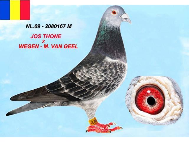 nl-09-2080167-m-1.jpg