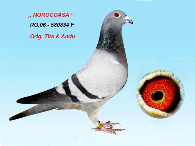 norocoasa-1.jpg