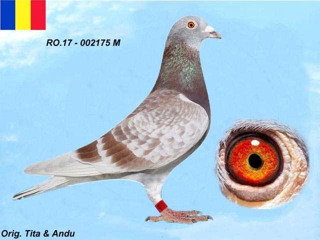 r0-17-002175-m-1.jpg