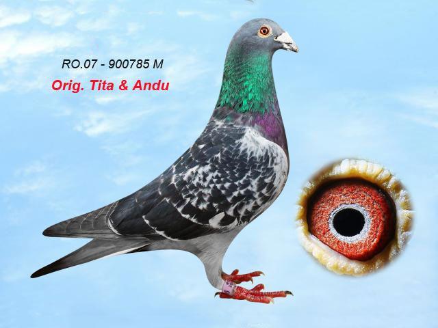 ro-07-900785-m-1.jpg