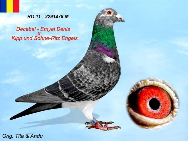 ro-11-2291478-m-1.jpg