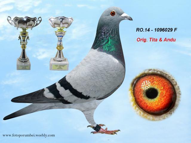ro-14-1096029-f-1.jpg