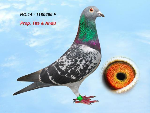 ro-14-1180266-f-1.jpg