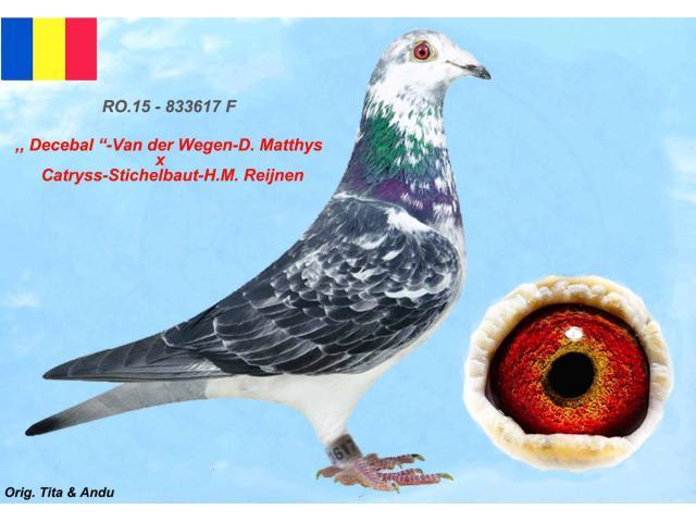 ro-15-833617-f-1.jpg