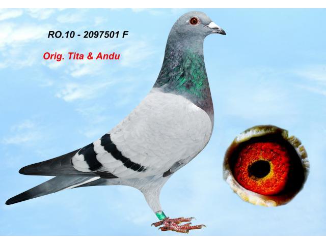 ro-2097501-2010-1.jpg