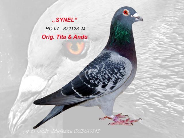 synel-1-1.jpg